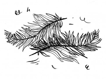 Sword fern || illustrated by Brandon Cotter