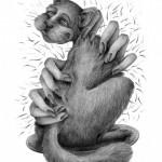 Prairie Cat    illustrated by Jenna Milsom