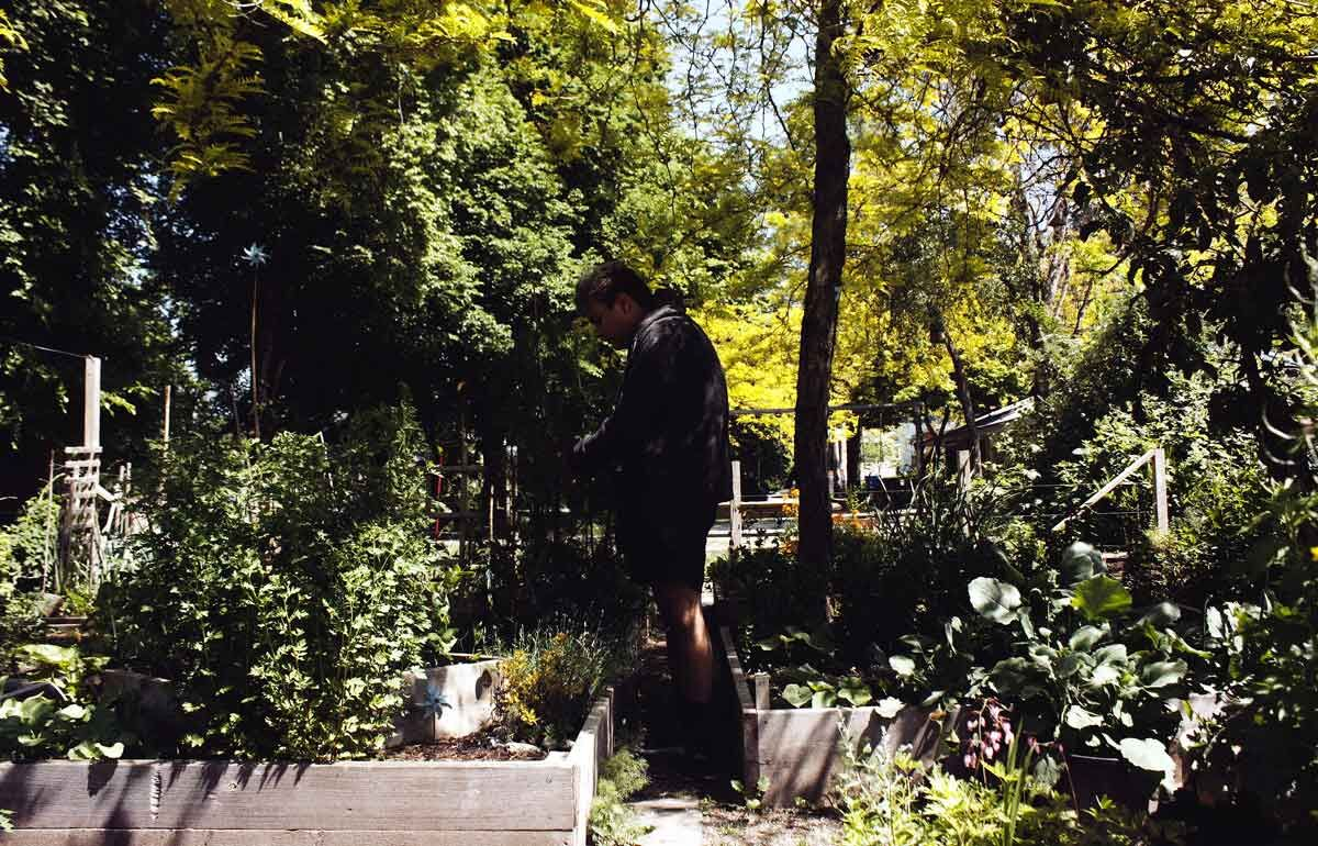 A figure is nestled in an overflowing garden intently leaning over a trough on the left side of the frame
