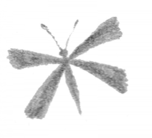 illustration of a small grey butterfly