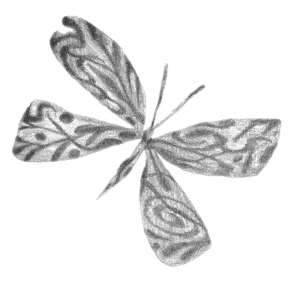 black and white illustration of a butterfly with abstract designs on its wings